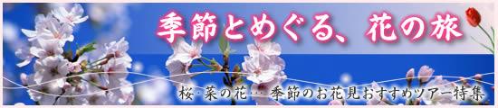 桜、ラベンダー…【季節とめぐる、花の旅】